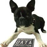 Harley2-1_data_protect_dog